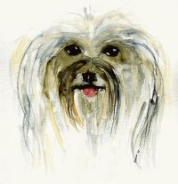 Bichon Havanese in Art