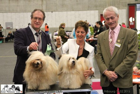 Swiss Havanese Club - Fribourg 2015