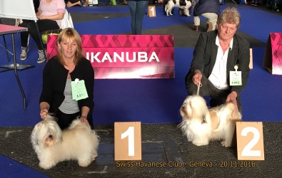 Swiss Havanese Club