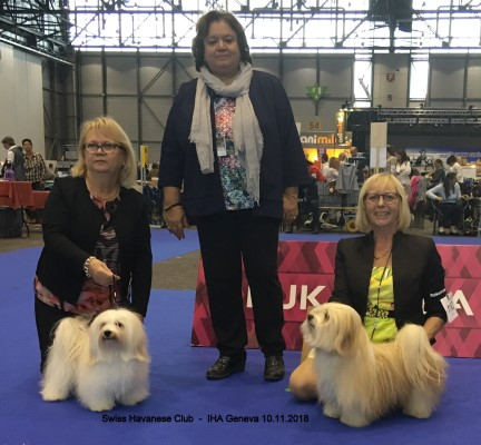 Swiss Havanese Club BOB and BOS