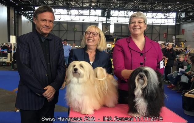 Swiss Havanese Club Geneva dog show 11.11.2018