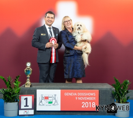 Swiss Havanese Club Havanese Best of Group 9
