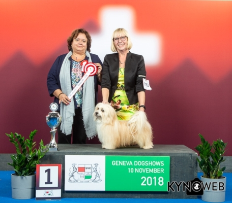 Best in Show Veteran Geneva 10112018